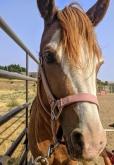 DCT horse: Breezy