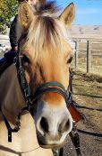 DCT horse: Libby