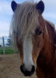DCT horse: Mr. Giggles