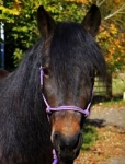 DCT horse: Wynn